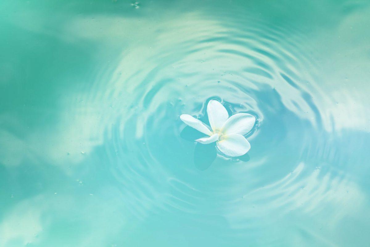 Copa menstrual dura para siempre sayoni care
