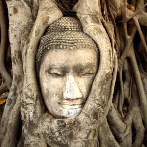 Sacred womb healing counselling therapy Sayoni Care