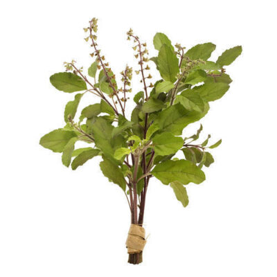 6 amazing Tulsi benefits sayoni care